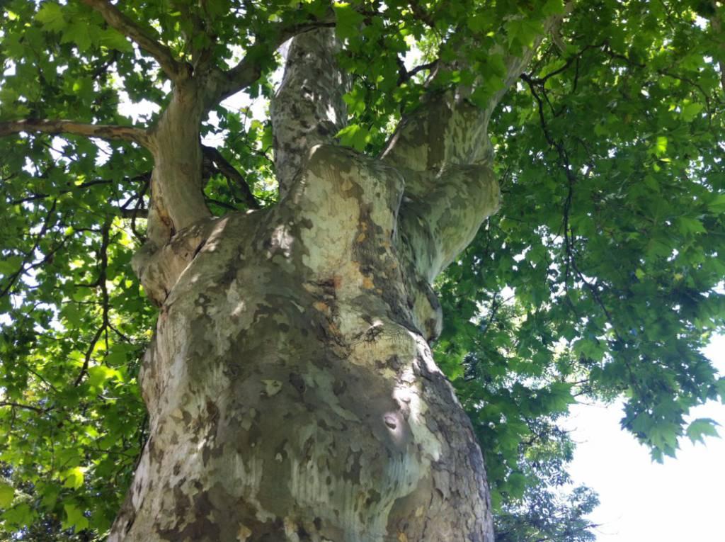 Mächtiger kraftvoller Baum