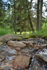 frisches klares Wasser in kleinen Bächlein
