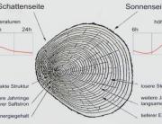 Grafik_Baumstruktur