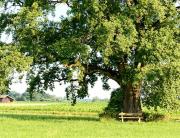 heimische Bäume
