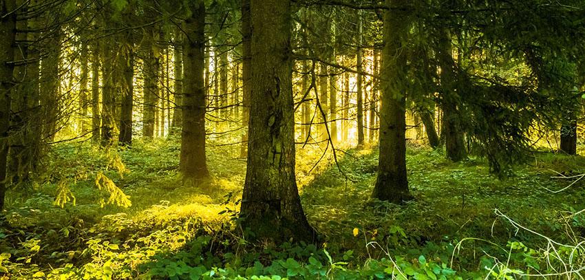 Kraft und Energie tanken im Wald