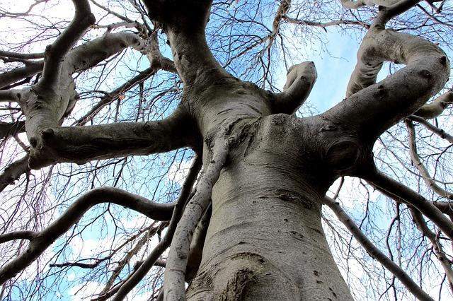 Bäume als Naturphänomene können auf Kraftorte hinweisen
