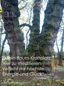 Kraftplatz Baum