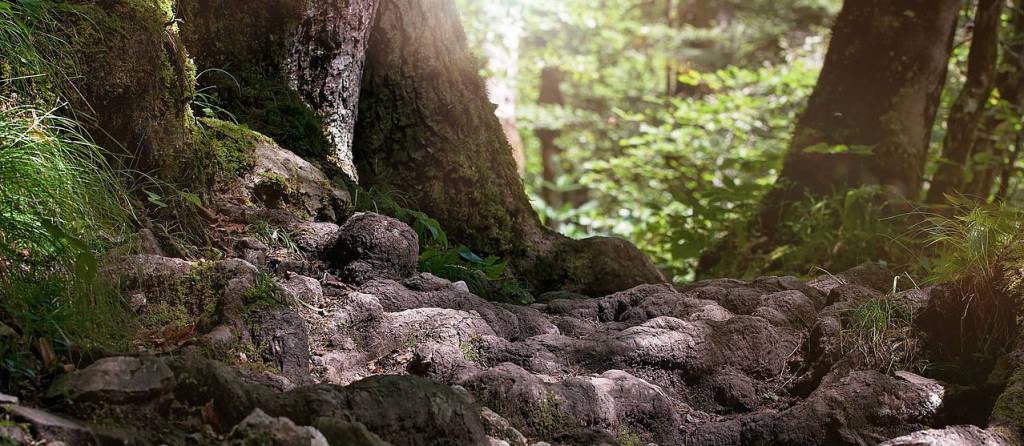 Kraftplätze finden in der Natur